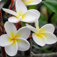 flowerr